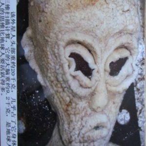 alien-head_2588259c