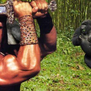 gorillas-fighting_2247232k
