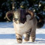 cat_in_snow_skyrim