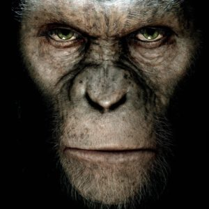 6785984-dawn-of-the-planet-of-the-apes
