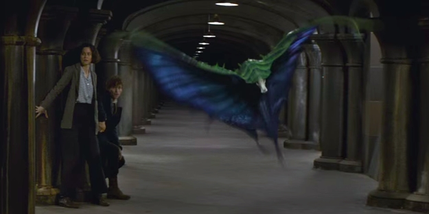 these-2-magical-creatures-will-be-featured-in-the-new-harry-potter-prequel