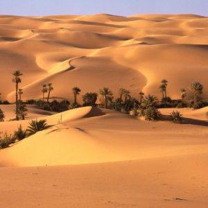 desert_oasis__libya1