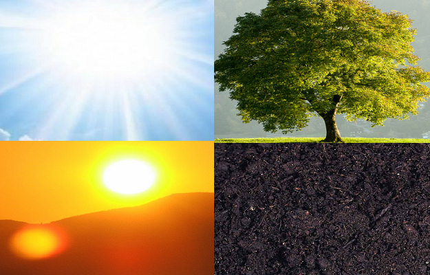 ışık - ağaç - güneş - toprak