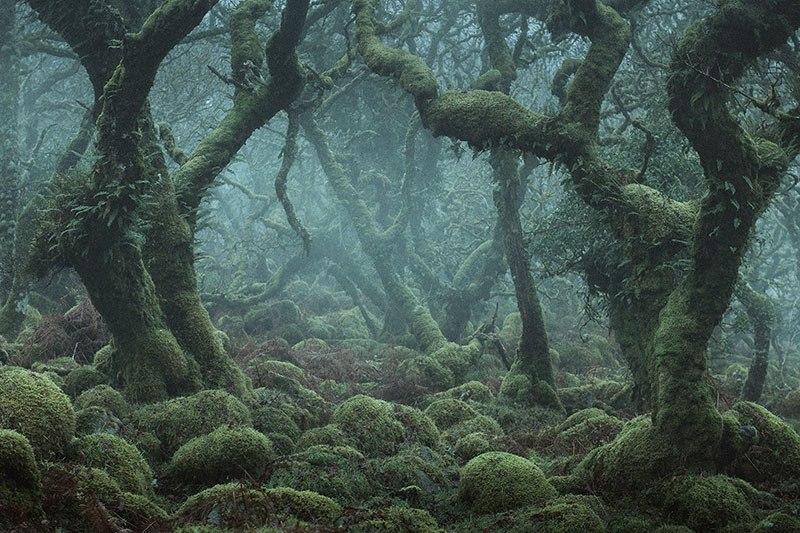 mitolojik -orman