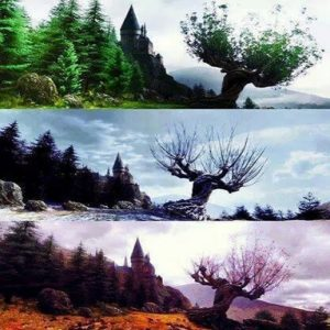 whomping willow in seasons