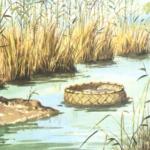 basket-river